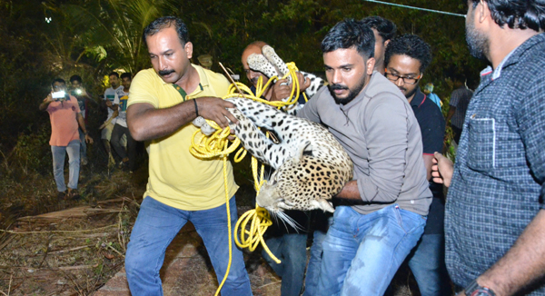 puli-caught1